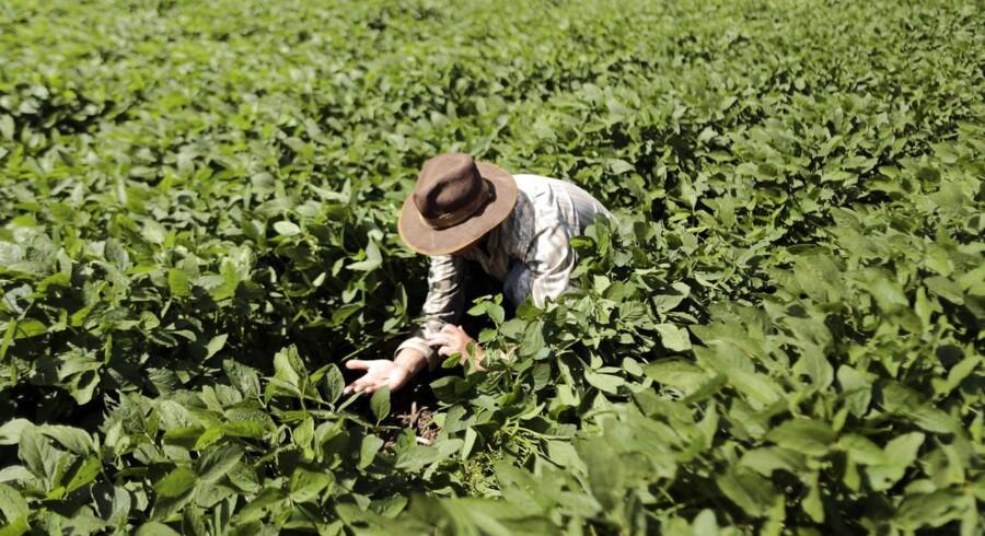 Det brasilianske landbrug, herunder sojaproduktionen, har været påvirket af ekstrem tørke siden januar.