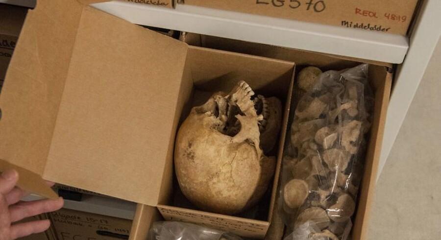 1.000 gamle skeletter skal skaffe ny viden om hjernesygdomme. Nyt samarbejde mellem KU og Lundbeckfonden skal undersøge en stor mængde skeletter for at kortlægge hvor ADHD, skizofreni, Parkinsons m.m. kommer fra – målt i tænder og knogler fra 10.000 år gamle skeletter. Professor Niels Lynnerup viser de opbevarede skeletter på Panuminstituttet.