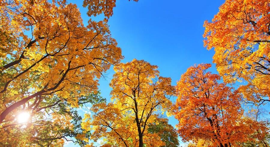 Et underskud af soltimer har præget de første seks uger af efteråret, og tendensen fortsætter i weekenden.