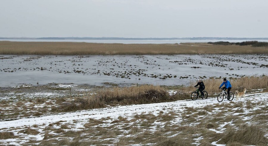 En menneskeskabt ø i Flade Sø i Thy skal hjælpe med at skåne naturen for 79 ton kvælstof.