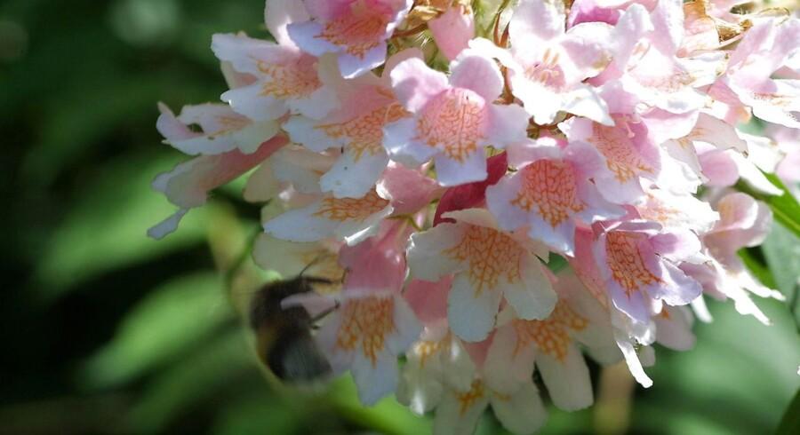 Japanske forskere har udviklet en minidrone, der kan bestøve blomster.