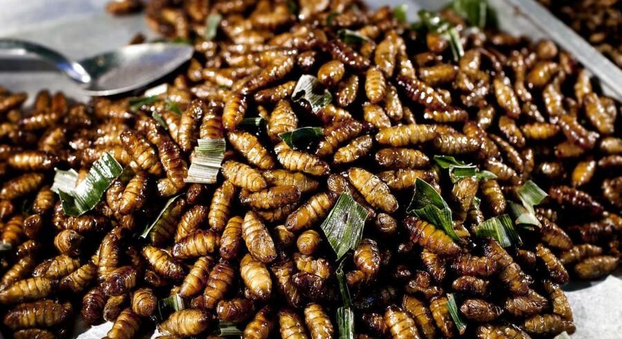I Asien og på flere andre kontinenter har insekter længe været en del af hverdagsmaden. Vesten er mere forbeholdne, men om få år til insekter være en ingrediens i for eksempel pølser, spår den tyske ingrediensvirksomhed Van Hees.