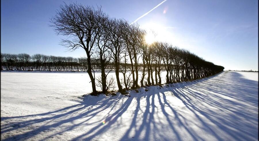 Sol og skygger ved en række træer på en mark nær Løgstør.