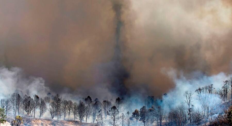 Voldsomme skovbrande hærgede sidste år Californien. Hyppigere og kraftigere hedebølger og generelt mere voldsomt vejr påvirker mange millioner mennesker, og netop forskellige former for miljø- og klimaudfordringer topper en ny liste over de største trusler mod kloden i disse år.