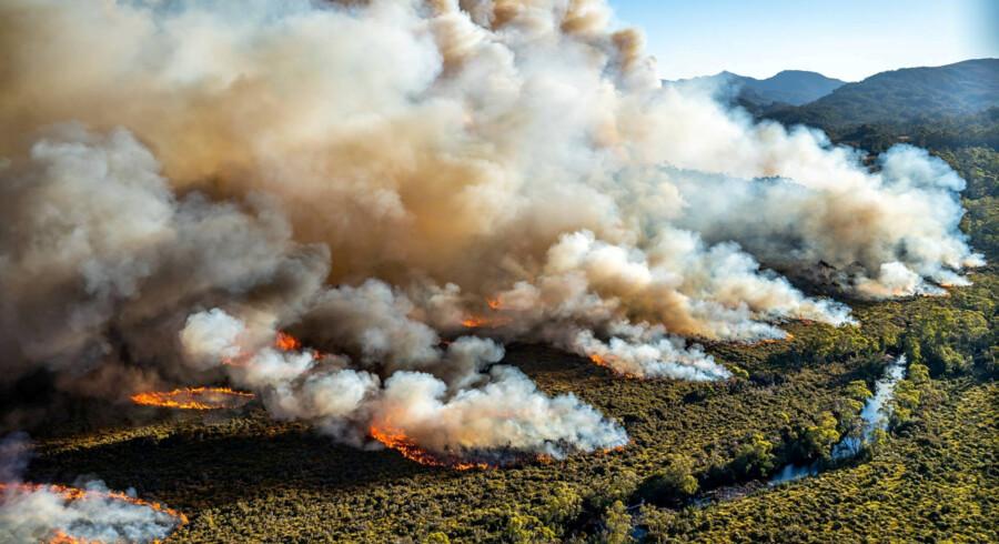 Den ekstreme hedebølge skabte flere skovbrande i Australien i januar. Her i Tasmanien. Reuters/Reuters