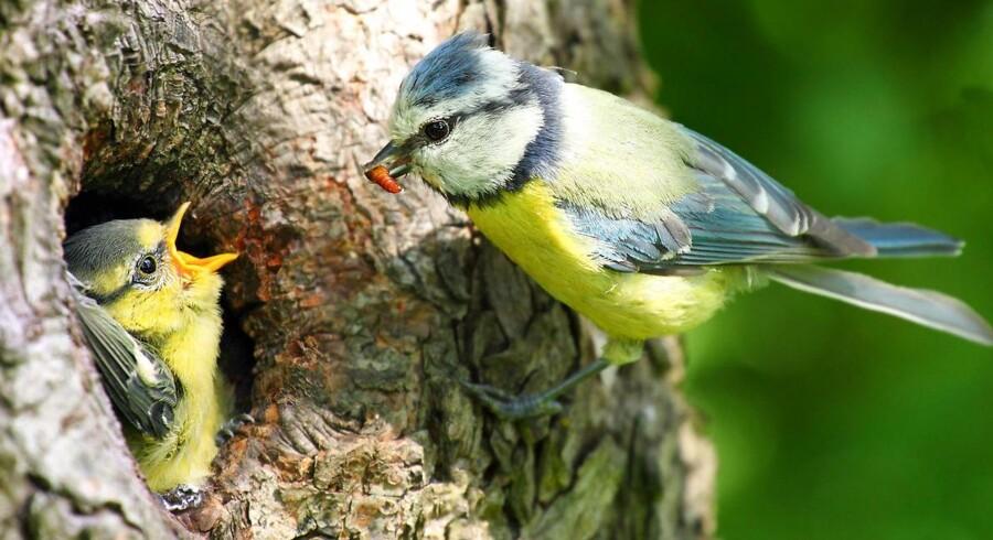 Klaus Søndermølle Petersen, der er far til et alvorligt sygt barn: »Vi er ikke fugle. Vi smider ikke de syge unger ud af reden, for at de raske får større chance for at leve. Vi giver alle en lige chance.«