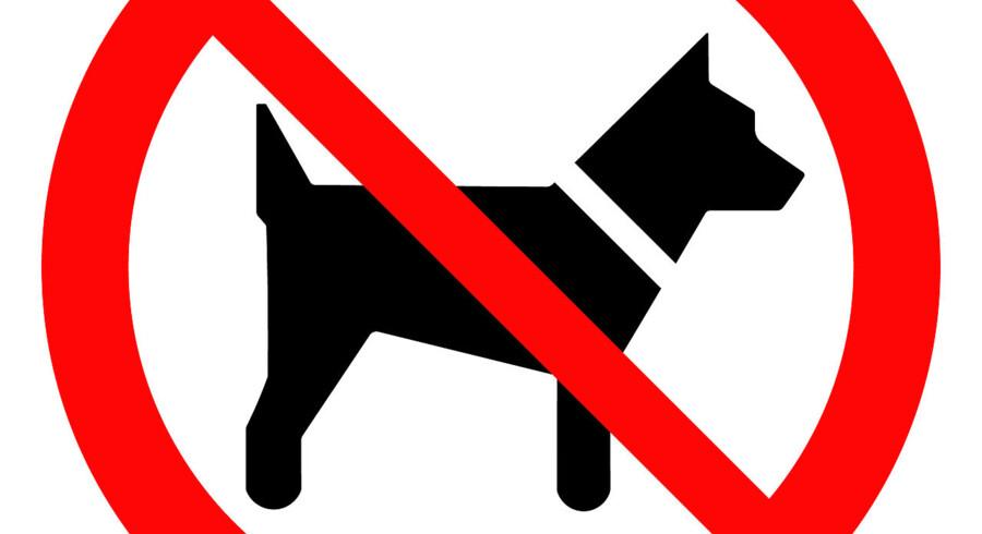 I Islam anses hunde for najis – urene. Vagthunde tolereres, men at holde hund som kæledyr er at gå for vidt. Problemet er imidlertid, at mange iranere er uenige.