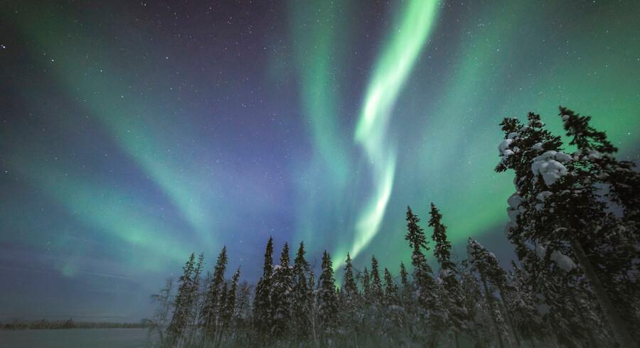Nordlyset er en af Levis største attraktioner og tiltrækker turister fra hele verden. Og maden i Lapland? Den er så speciel, at danske kokke som René Redzepi og Claus Meyer har været på besøg for at få inspiration.
