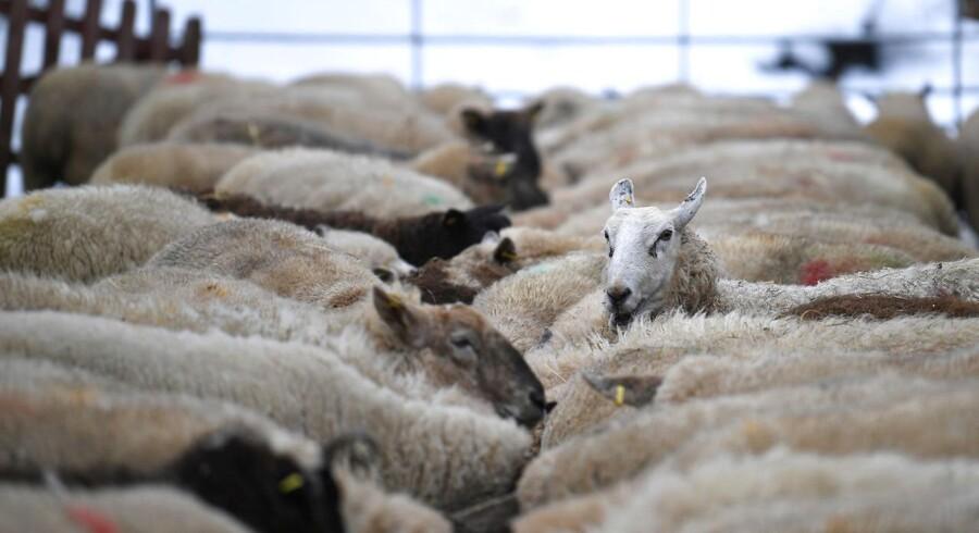 Lamme- og oksekød fra Irland er nogle af de varer, der vil blive pålagt de højeste toldsatser, hvis Storbritannien forlader EU uden en aftale.