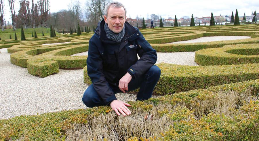 70.000 buksbom skal udskiftes, og over 20 års arbejde er gået tabt, men sådan er naturen nogle gange, mener John Nørgaard Nielsen, som er slotsgartner i Barokhaven ved Frederiksborg Slot.