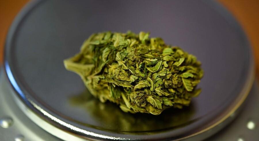 Opfattelsen af cannabis har ændret sig markant. Planten bliver nu set som et investeringsprodukt i erhvervslivet, hvilket afspejles i det stigende antal af patenter på cannabisprodukter.