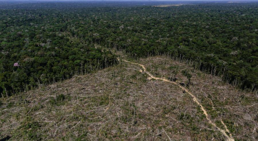 Under Jair Bolsonaros første syv måneder som præsident har den brasilianske del af regnskoven mistet mere end 3.000 kvadratkilometer skovområde.