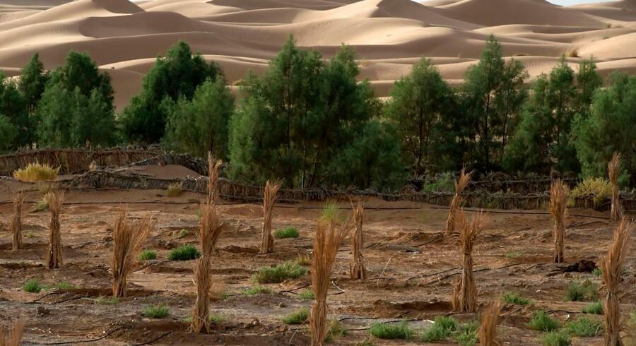 Omkring en halv milliard mennesker lever i dag i områder, der er ramt af ørkendannelse – som her i Marokko. Ifølge den nye IPCC-rapport vil klimabælterne flytte sig i fremtiden, hvilket kan skabe stigende flygtningestrømme og lægge yderligere pres på Jordens begrænsede ferskvandsressourcer.