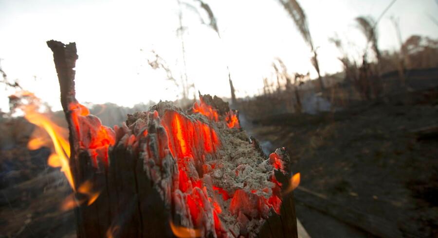 Antallet af skovbrande i Amazonas er på det højeste niveau siden 2013.