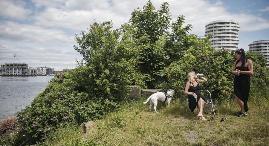 Jette Grøndal og Monique Andersen hygger ved vandet ved Nokken med hundene Milo og Malle. Fotos fra en del af den nye havnering.