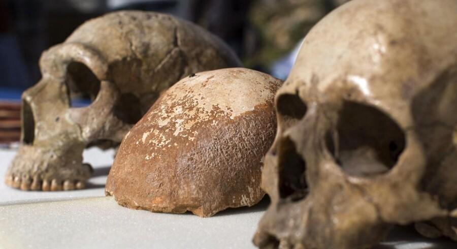 Mellem to kranier af neanderthalere ses her den delvist bevarede hjerneskal af et moderne menneske. Hjerneskallen er fundet i Manotgrotterne i Israel, og er 55.000 år gammel. Den er hermed det hidtil ældste eksemplan fundet uden for Afrika.