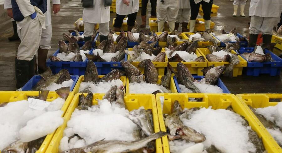 Regeringen og alle Folketingets partier har indgået en aftale, der skal sikre, at kvoterne i dansk fiskeri ikke koncentreres på for få hænder. Arkivfoto.