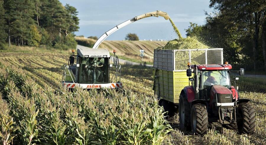 Næsten halvdelen af landets mælke- og svineproducenter er i store økonomiske problemer. Regeringens landbrugspakke og andre hjælpetiltag er ikke nok til at hive dem op af den økonomiske suppedas. Det mener direktør i Landbrugets Finansieringsbank, Jesper Lyhne. (Foto: Henning Bagger/Scanpix 2016)