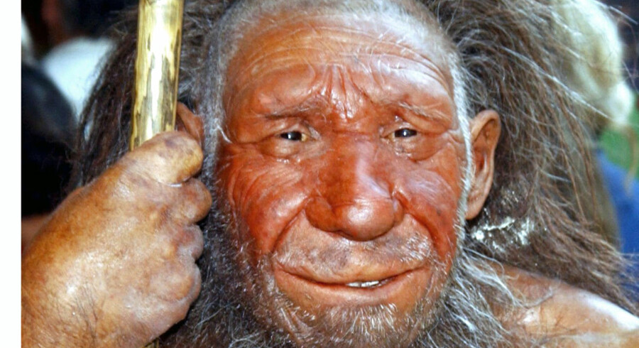 ARKIVFOTO. Indtil for nylig troede forskere, at undersøgelser fra 1950erne dokumenterede fortidsmenneskets danske forbindelse, men ny forskning har netop udhulet beviset. Billedet er af en voksfigur af en neandertaler.