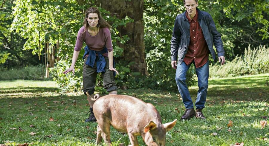 Drama: Signe (Marie Bach Hansen) og kæresten (Mikkel Arndt) jager frilandsgrise på afveje. Foto: Per Arnesen.