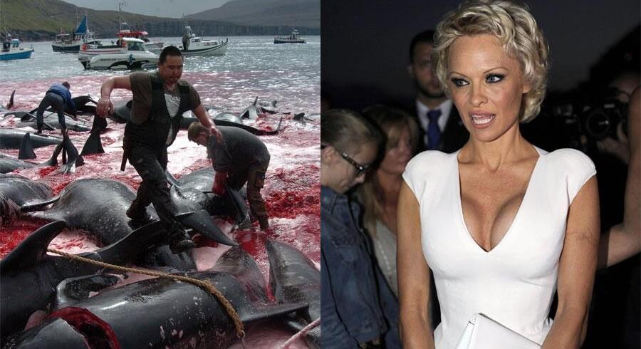 »Hr. statsminister, jeg kan ikke se noget, der kan retfærdiggøre denne horrible nedslagtning, denne påførelse af en sådan pinefuld ondskab og forvandlingen af så smukke, intelligente og sociale dyr som grindehvaler og delfiner,« skrev Pamela Anderson forleden på sin hjemmeside.