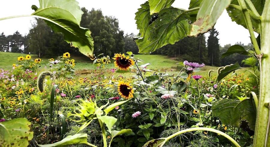 (ARKIV) Kom ukrudt, skadedyr og insekter til livs uden at bruge sprøjtemidler i haven. (Foto: Preben Madsen/Ritzau Scanpix)