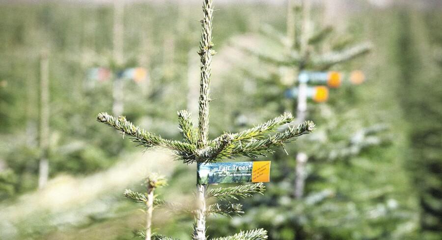 Fair Seeds er dyrket i Georgien og bliver senere til Fair Trees. Øverst t.h. plantebedene, efter at de er sået ud på marken. Foto: Fair Trees
