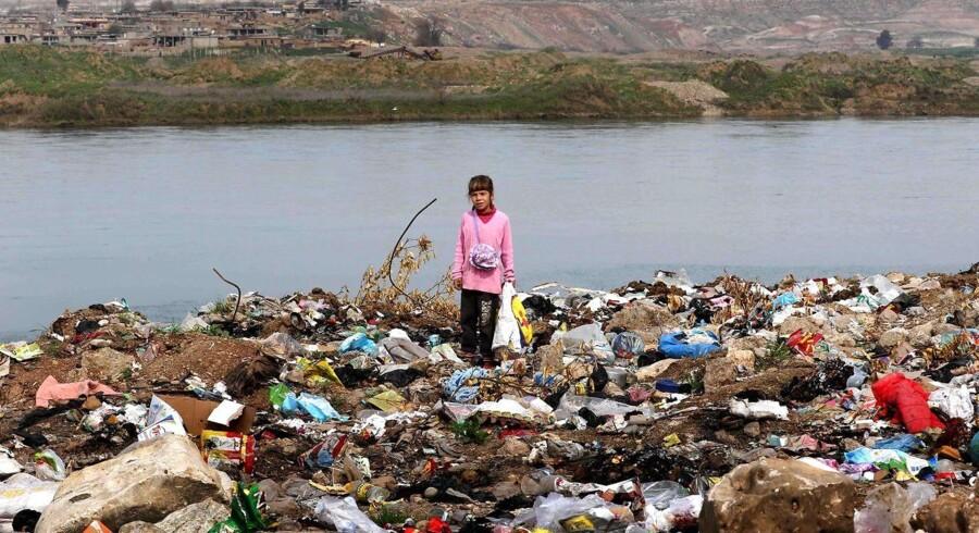 Der ligger døde hunde og kaniner i skraldespandene i Mosul, og med jævne mellemrum driver en stærk lugt af kemiske stoffer gennem nogle af byens kvarterer. Arkivfoto: Irakisk pige står på en banke af skral 10 kilometer syd for Mosul.