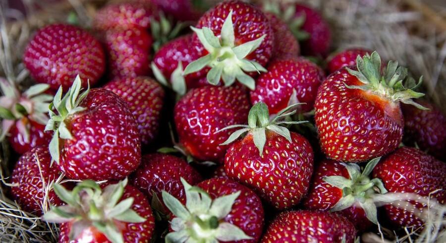 Der er fundet sprøjtegifte i 74 procent af danske ikke-økologiske jordbær, og i 86 procent af de udenlandske ikke-økologiske.
