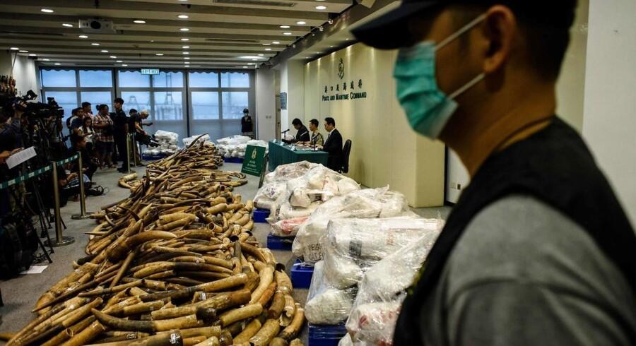 Mere end 90 procent af dem, som køber elfenben i Hongkong, kommer fra det resterende kinesiske fastland ifølge Reuters.