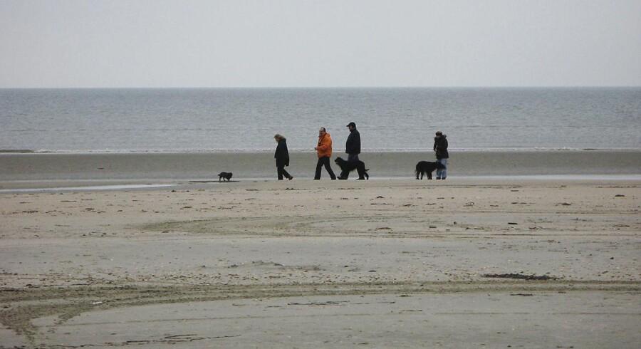 Arkivfoto af Rømø: Det er fundet et forhøjet antal colibakterier ved stranden ved Lakolk på vadehavsøen Rømø.