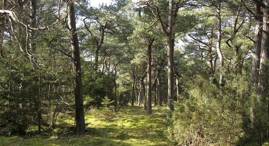 Tisvilde hegn - landets hotspot for truede arter.
