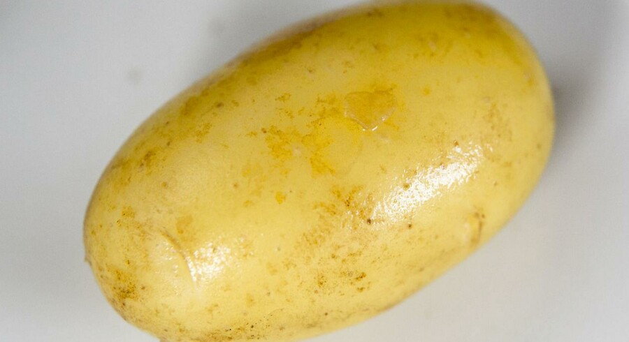 Selvom den består af 90n pct. vand, så har tomaten overtaget kartoflens rolle.