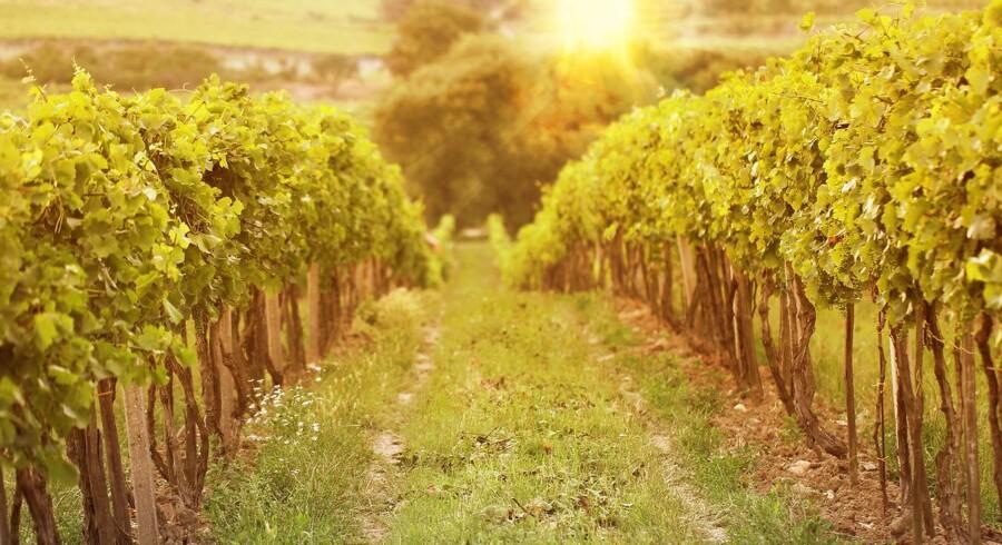 Loire og Jura-vin giver konkurrenterne baghjul.