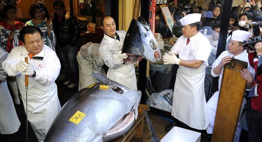 Så skal der snittes. Årets første kæmpetun skal ende sine dage som 10.000 tynde skiver sushi i Tokyo.