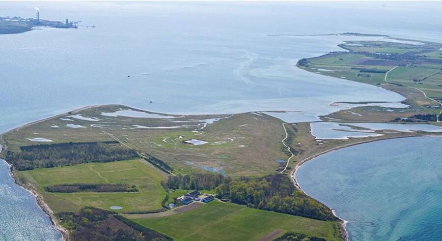 Et rigt dyreliv og flere ejendomme på en ø uden for Skælskør har fået en ny ejer. Øen Egholm er nemlig blevet solgt. Foto: Ivan Eltoft Nielsen
