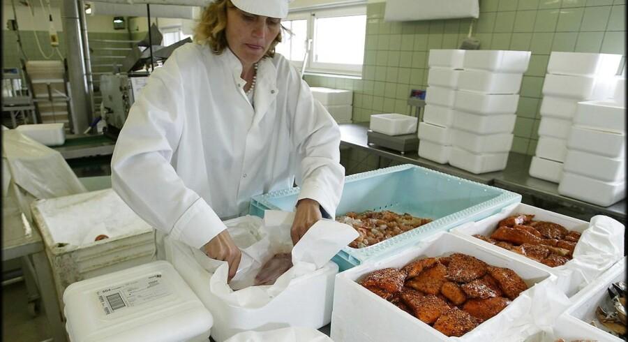 Direktør Peter Bagge-Nielsen og Betinna Kühn pakker fisk til afsendelse . Her pakkes der i kasser.
