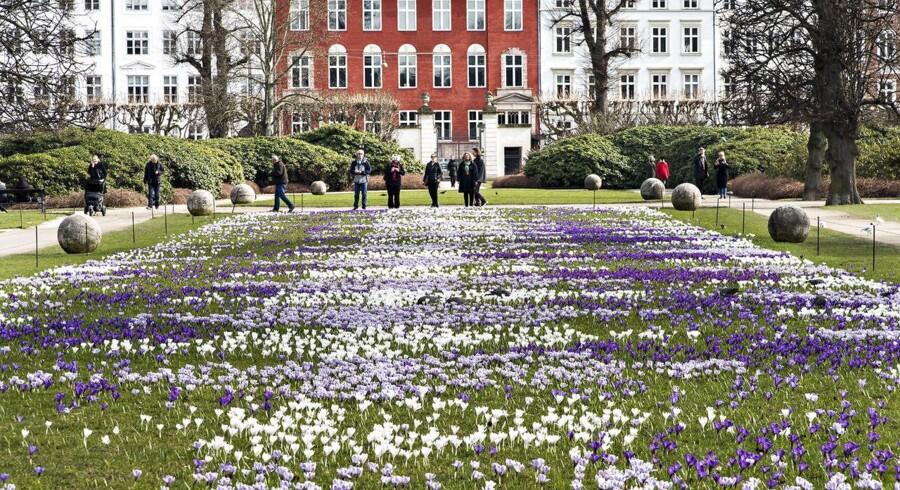 Så er foråret kommet. Turister, københavnere samt et par duer beundrer de nyudsprungne Krokus på plænen foran Rosenborg Slot i Kongens Have torsdag 23. marts 2017.