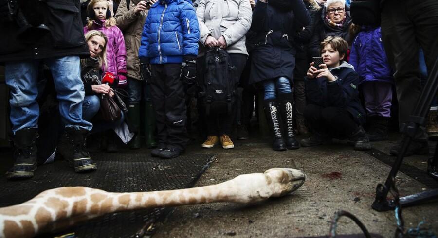 Københavns Zoo var selv igennem en international shitstorm i forbindelse med aflivningen af giraffen Marius.