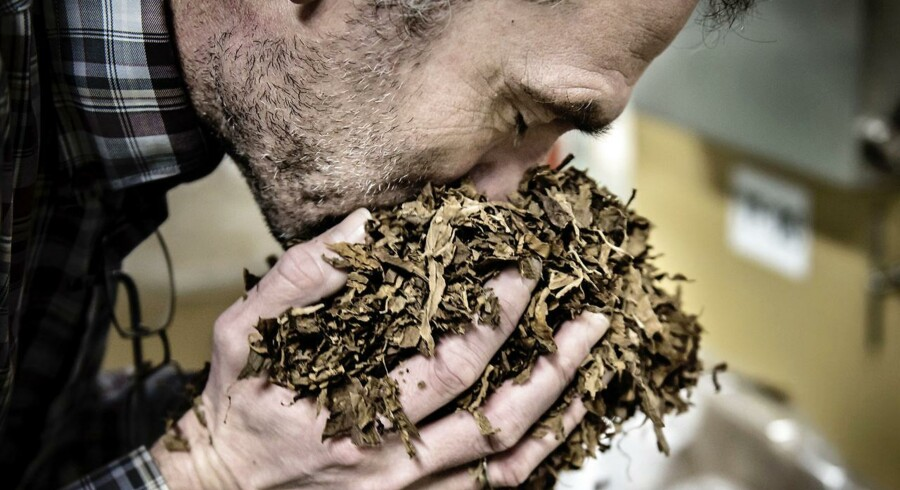 De amerikanske forbrugere købte flere håndrullede cigarer og mere finskåren tobak i årets tre første måneder, men salget af Scandinavian Tobacco Groups maskinrullede cigarer og pibetobak gik tilbage (Foto: Thomas Lekfeldt/Scanpix 2016)