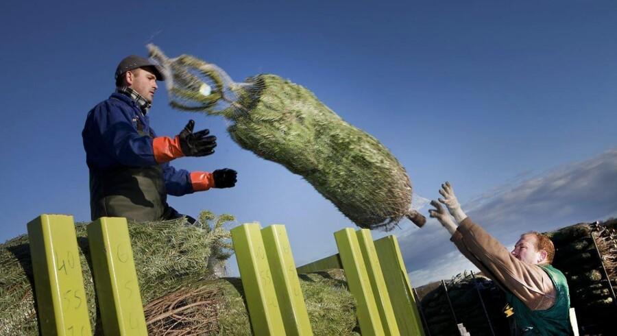 Turbojuletræer skal gøre julen grønnere.