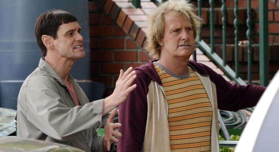 Arkivfoto. Skuespillerene Jim Carrey og Jeff Daniels fra filmen »Dum og dummere 2«.
