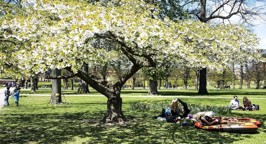 Ti træer i Kongens Have. (Foto: Sara Gangsted/Scanpix 2015)