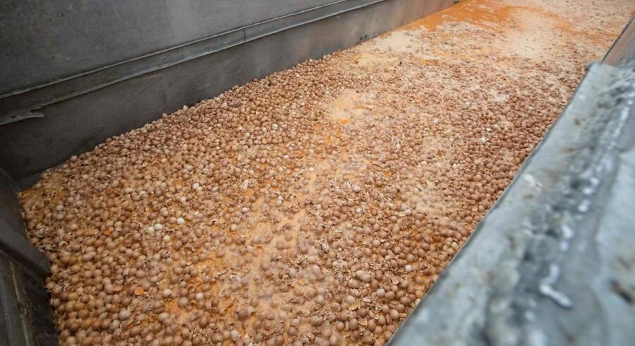Enorme mængder æg bliver destrueret i Belgien og Holland, fordi de kan ideholde rester af et ulovligt sprøjtemiddel.