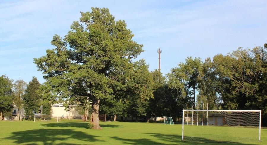 Konkurrencen Årets europæiske træ er blevet afholdt siden 2011, og i år var det dette viljefaste egetræ, der løb af med sejren på en fodboldbane i Estland.