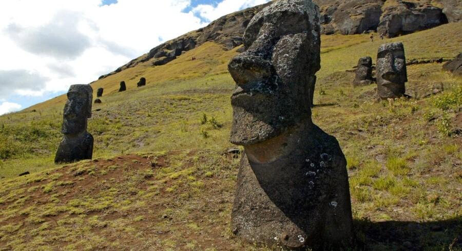 Næsten over alt på Påskeøen i Stillehavet er der stenhoveder. De er skabt fra 1100- 1600-tallet.