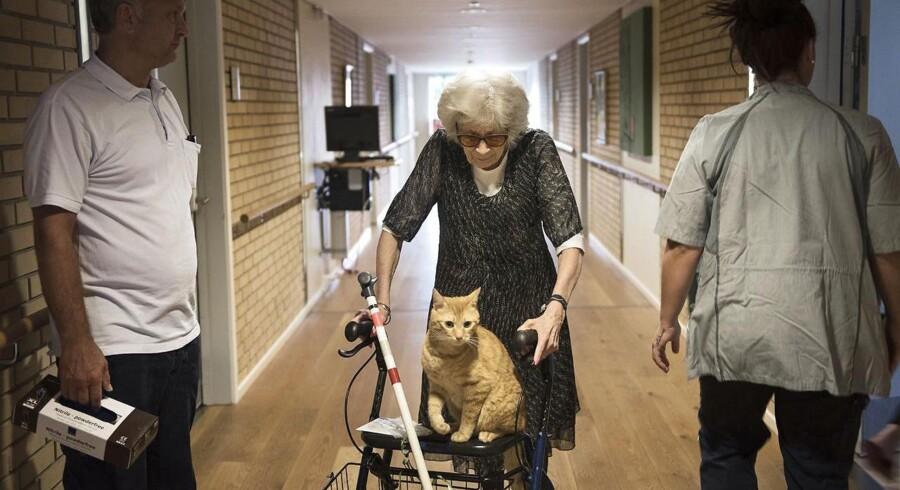 Else Hansen med katten Frederik på plejehjemmet Egegården i Gladsaxe.