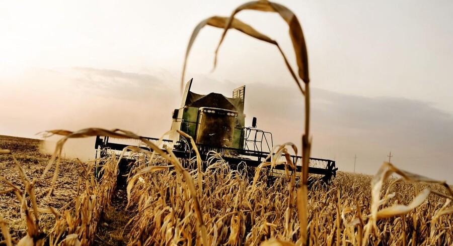 Kornselskabet Cimbria er blevet solgt af den britiske kapitalfond Silverfleet Capital til den amerikanske landbrugsgigant Agco. Arkivfoto: Landbrug i Rumænien.
