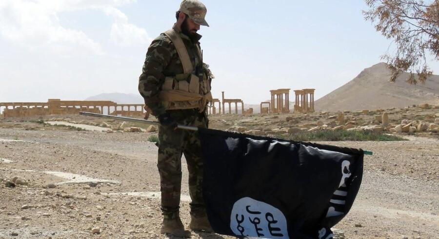 En soldat fra den syriske hær står med et af Islamisk Stats flag 27. marts. De syriske tropper genvandt i sidste uge kontrollen over oldtidsbyen Palmyra, der i knap et år havde været overtaget af terrorgruppen.