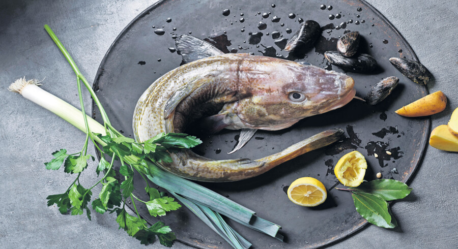 Ovnfrikassé af fisk og grøntsager. Foto: Lars Ranek.